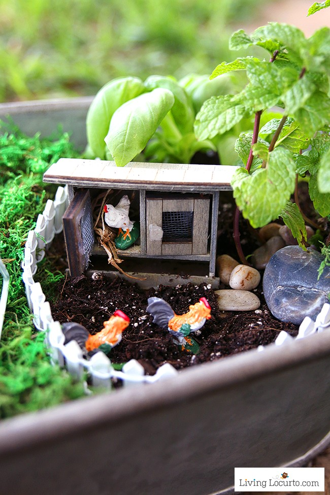 Tiny Chicken Coop. An Herb Fairy Garden is a fun container garden for your kitchen! Easy tutorial for how to make a mini fairy garden for your home.